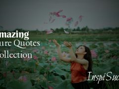 Picture Quotes Collection